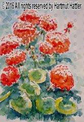 0035_Blumen.jpg