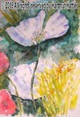 0062_Blumen.jpg