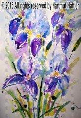 0078_Blumen.jpg